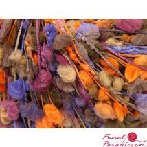 Trento Orchidea, narancssárga, lila, keki