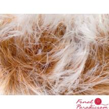 Smooth Fur fehér, világosbarna